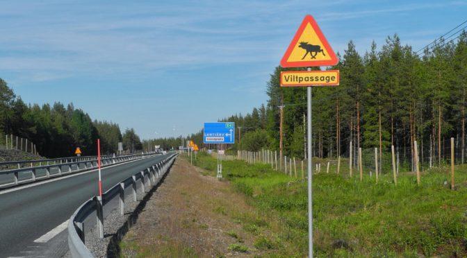 Day 8, Umeå – Rovaniemi, 615Km (382 miles)